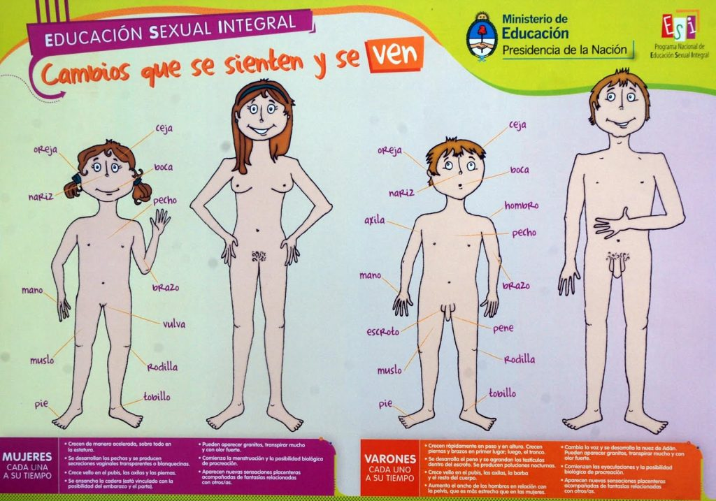lamina_educacion_sexual