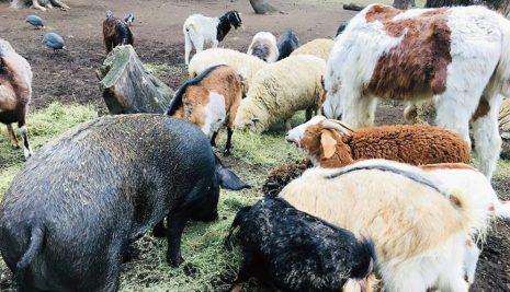 REFUGIOS DE ANIMALES: CÓMO SOBREVIVEN DURANTE EL AISLAMIENTO